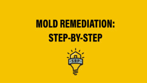 Thumbnail Mold Remediation Step By Step
